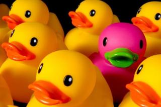 Rubber Ducks - 1 pink